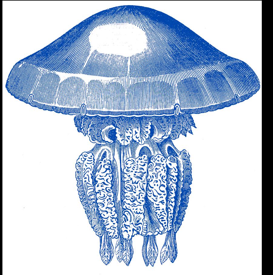 jellyfish 1 - Leuke uitstappen in de krokusvakantie